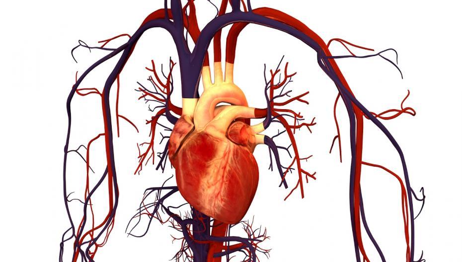 AI обнаружил гены, связанные с сердечной недостаточностью