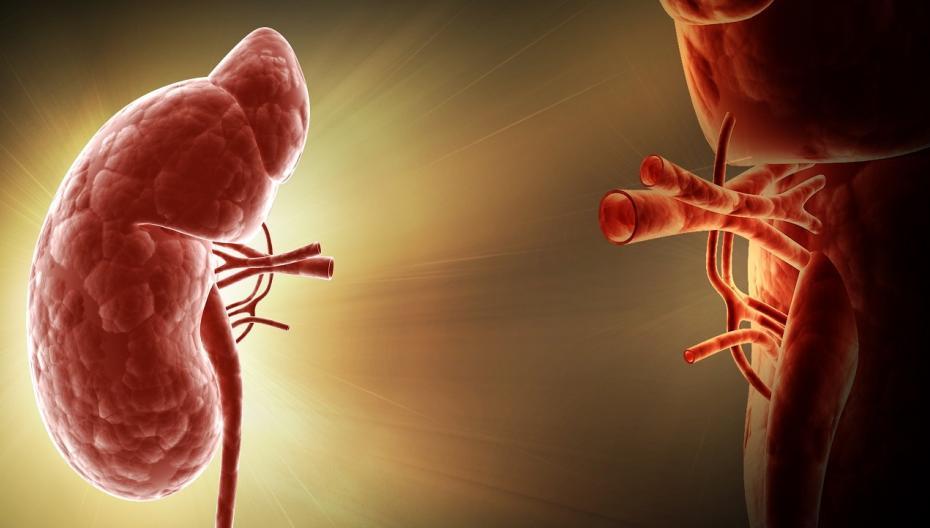 Телемедицина для пациентов после трансплантации почки