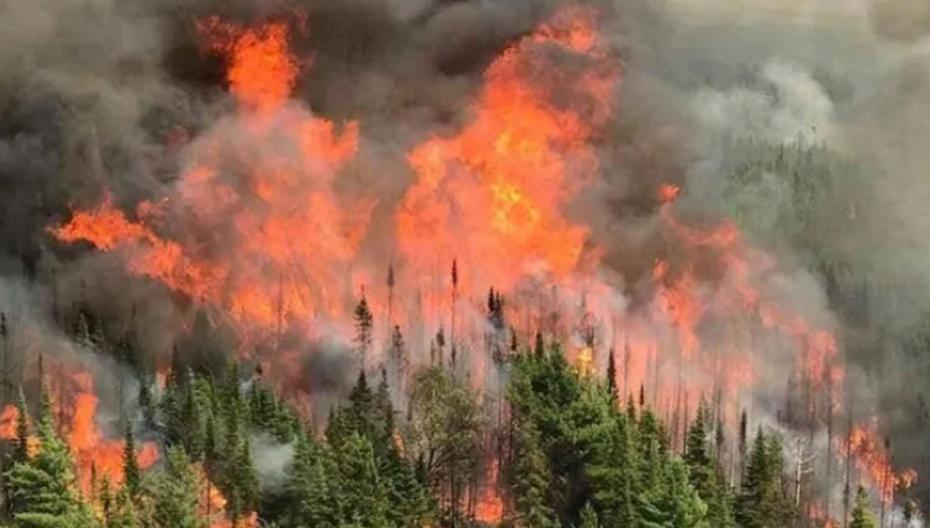 Смартфон может использоваться для прогнозирования лесных пожаров