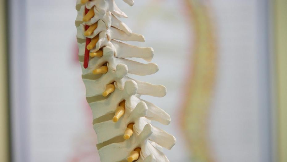 AI-система Zebra для планирования ортопедической операции разрешена к применению