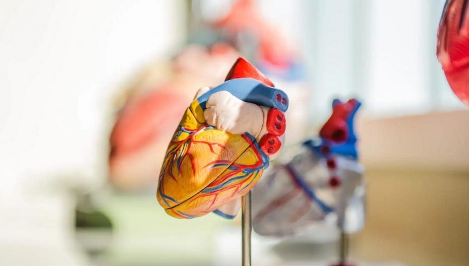 Искусственное сердце, с которым можно долго жить