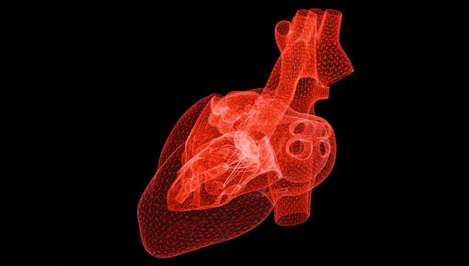 Вырастить искусственное сердце