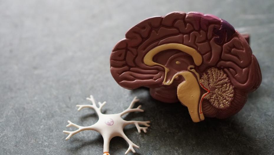 Приложение для диагностики психиатрических заболеваний