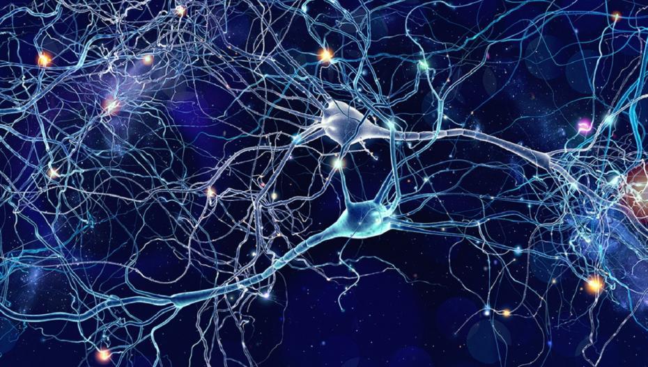 Ученые научились печатать нейроны