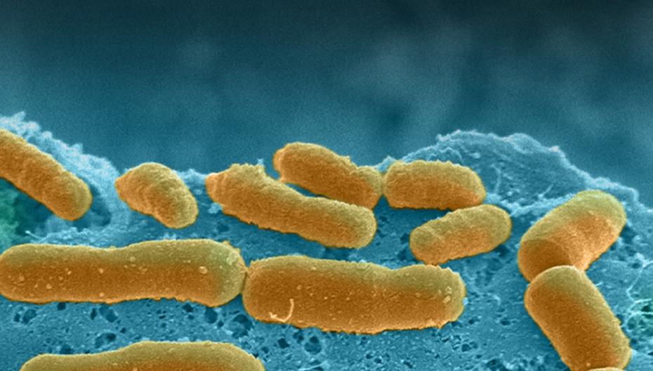 Чип для изучения взаимодействия человека со своим микробиомом