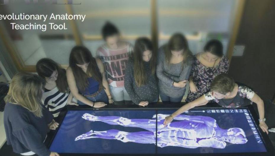 Электронный стол для изучения анатомии