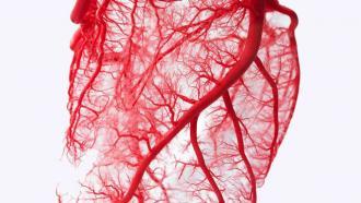 """Печатать """"живые"""" кровеносные сосуды, готовые для имплантации"""