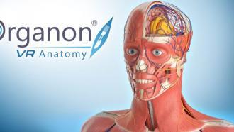 Анатомический атлас в виртуальной реальности