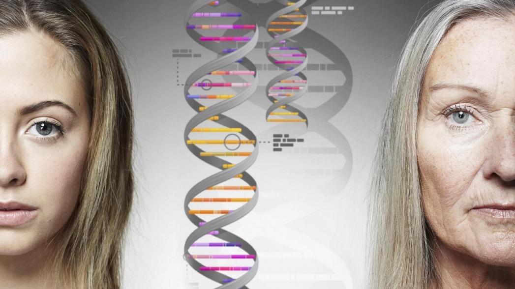 Deep Longevity разрабатывает эпигенетические часы старения, отличающиеся высокой точностью