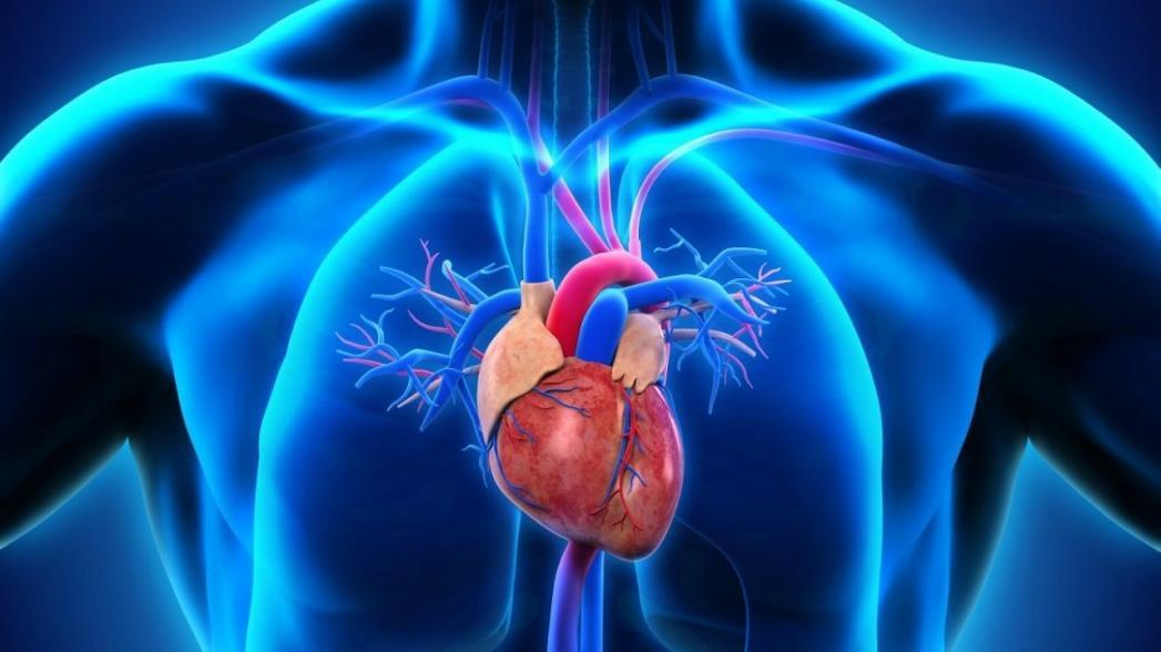 Corvion: Полностью имплантируемый LVAD (левожелудочковый аппарат вспомогательного кровообращения)