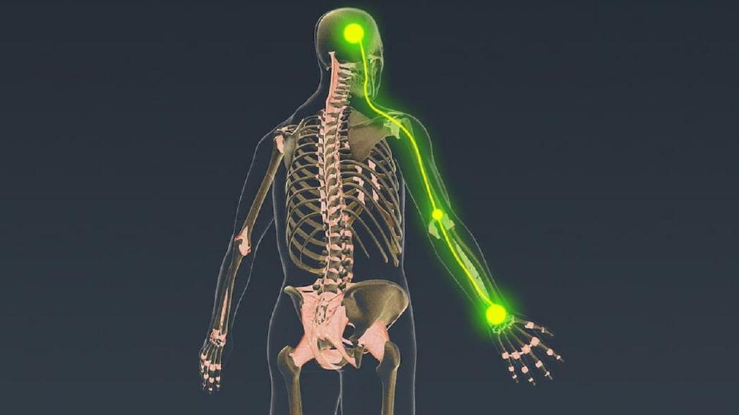 Крошечный имплантат, который может вернуть пациентам с травмой позвоночника контроль над конечностями