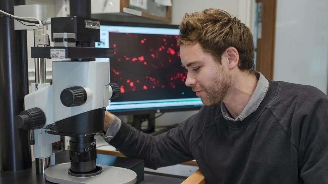 Разработан метод объемной микроскопии человеческих органов