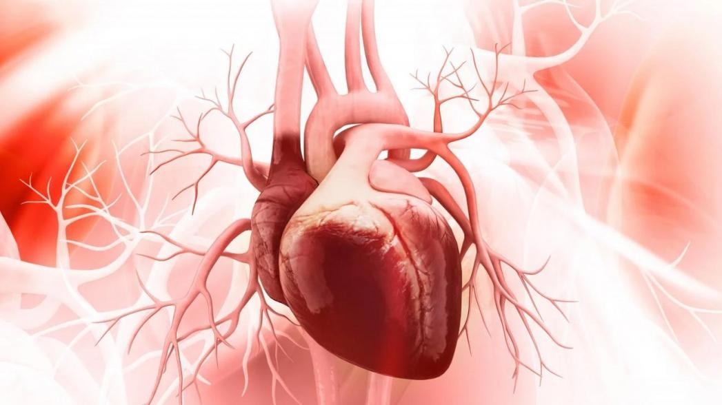 Zebra Medical Vision получила разрешение на использование AI-системы для выявления сердечно-сосудистых заболеваний