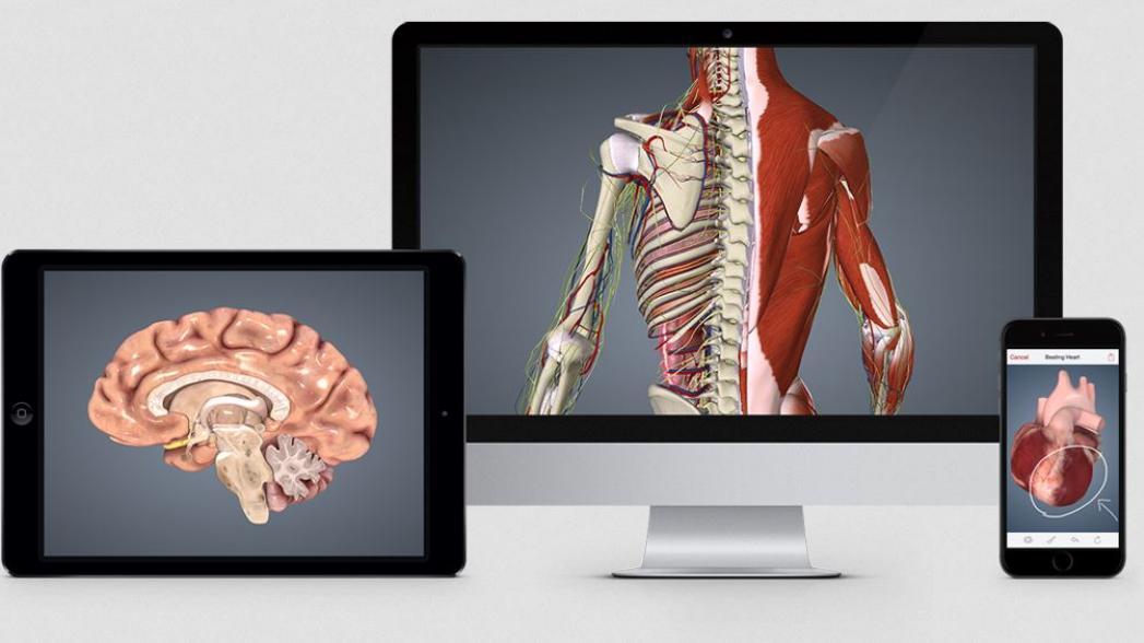 BioDigital предлагает разработчикам свою 3D-модель человеческого тела