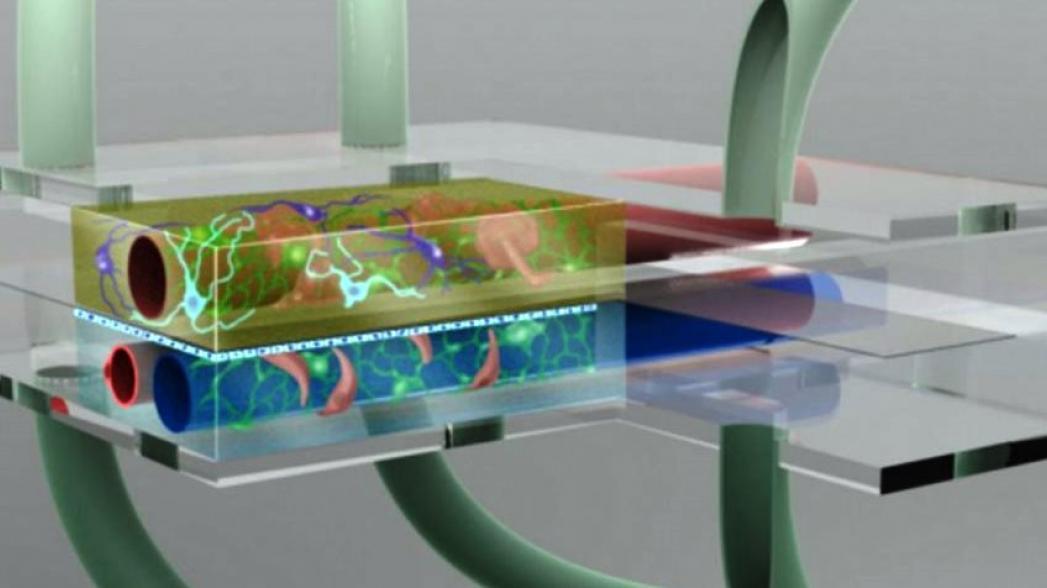 Революционная технология 3D-печати человеческих органов