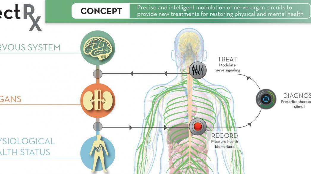 DARPA: наше тело будет лечить себя самостоятельно