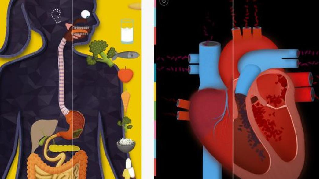Интерактивная анатомия для детей