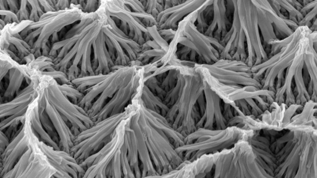 Микроскопическая система доставки лекарств, которой можно дистанционно управлять