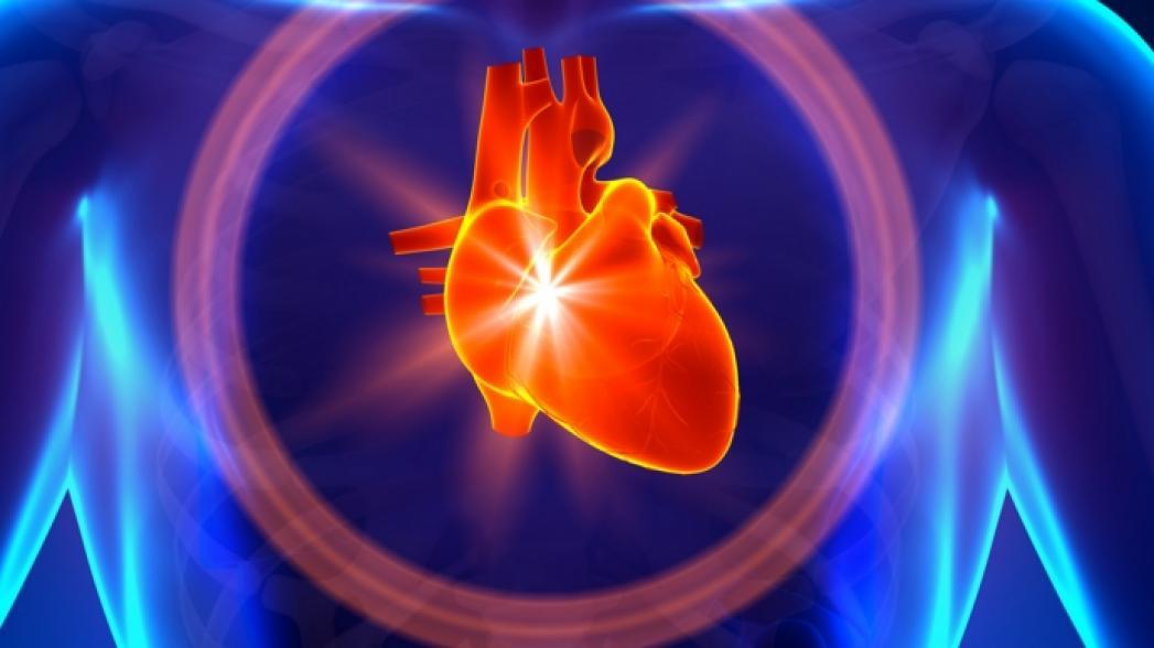 Клон сердца рассчитал «Лобачевский»