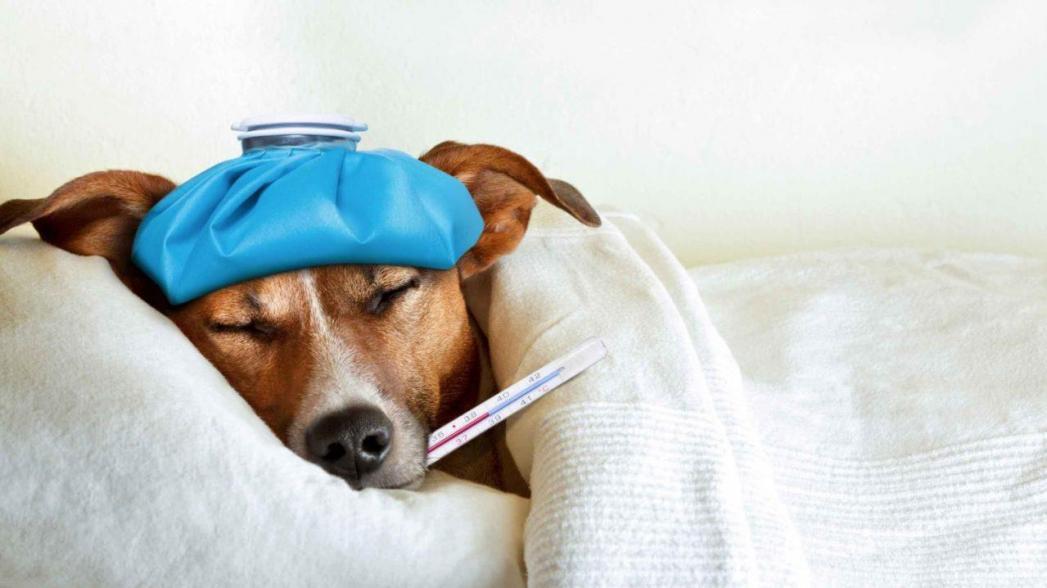 Искусственный интеллект для прогнозирования заболеваемости гриппом