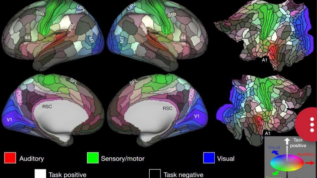 Приложение поможет оценить риск развития болезни Альцгеймера