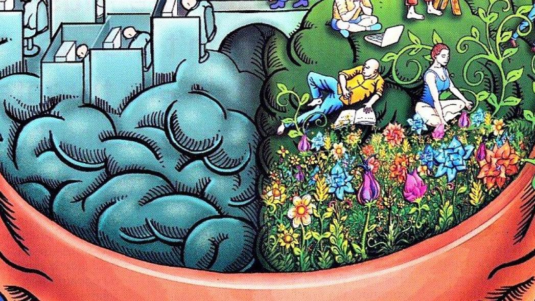 Создана сверхточная карта мозга