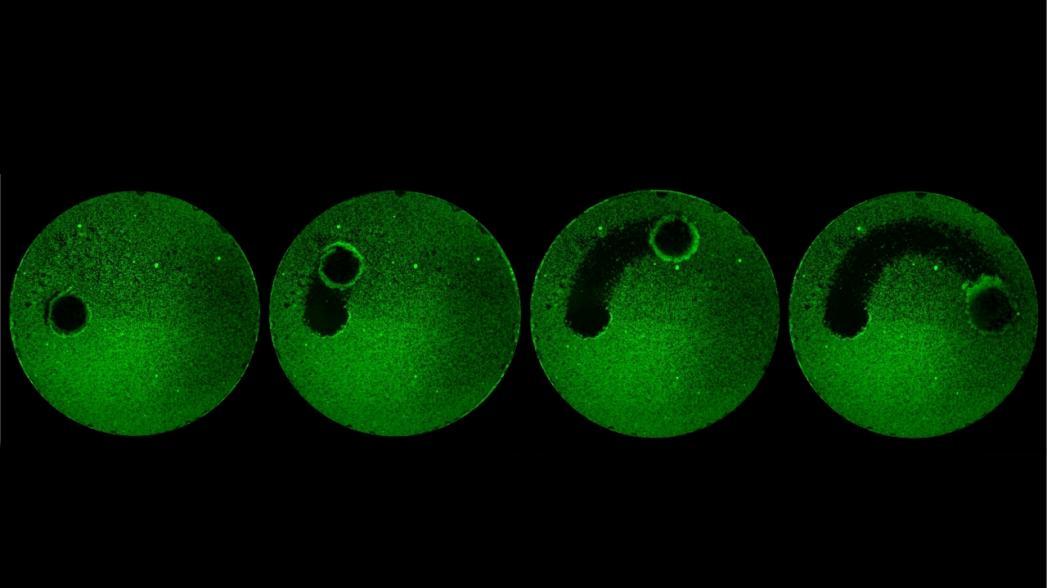 Микроскопические роботы для чистки зубов