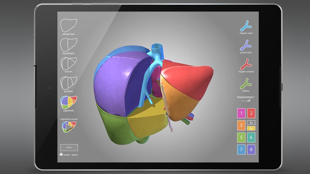 Surgical Anatomy of the Liver: идеальный учебник по хирургии печени